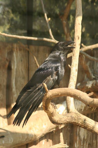 velký ptáci sex praha 4