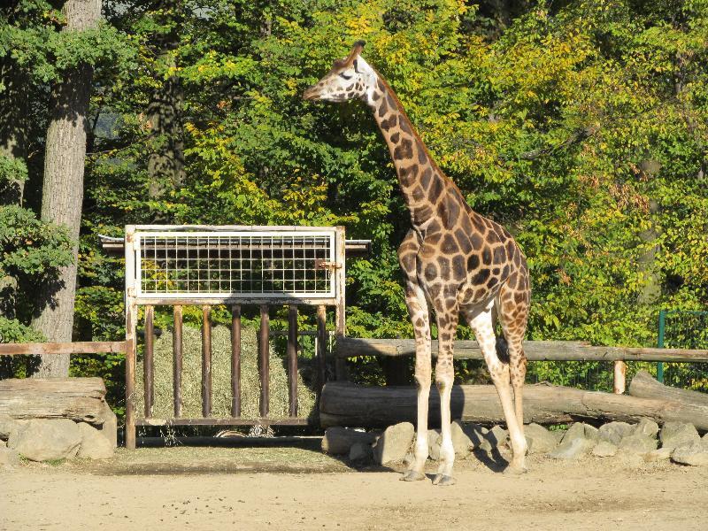 zoo park næstved atlas biografer